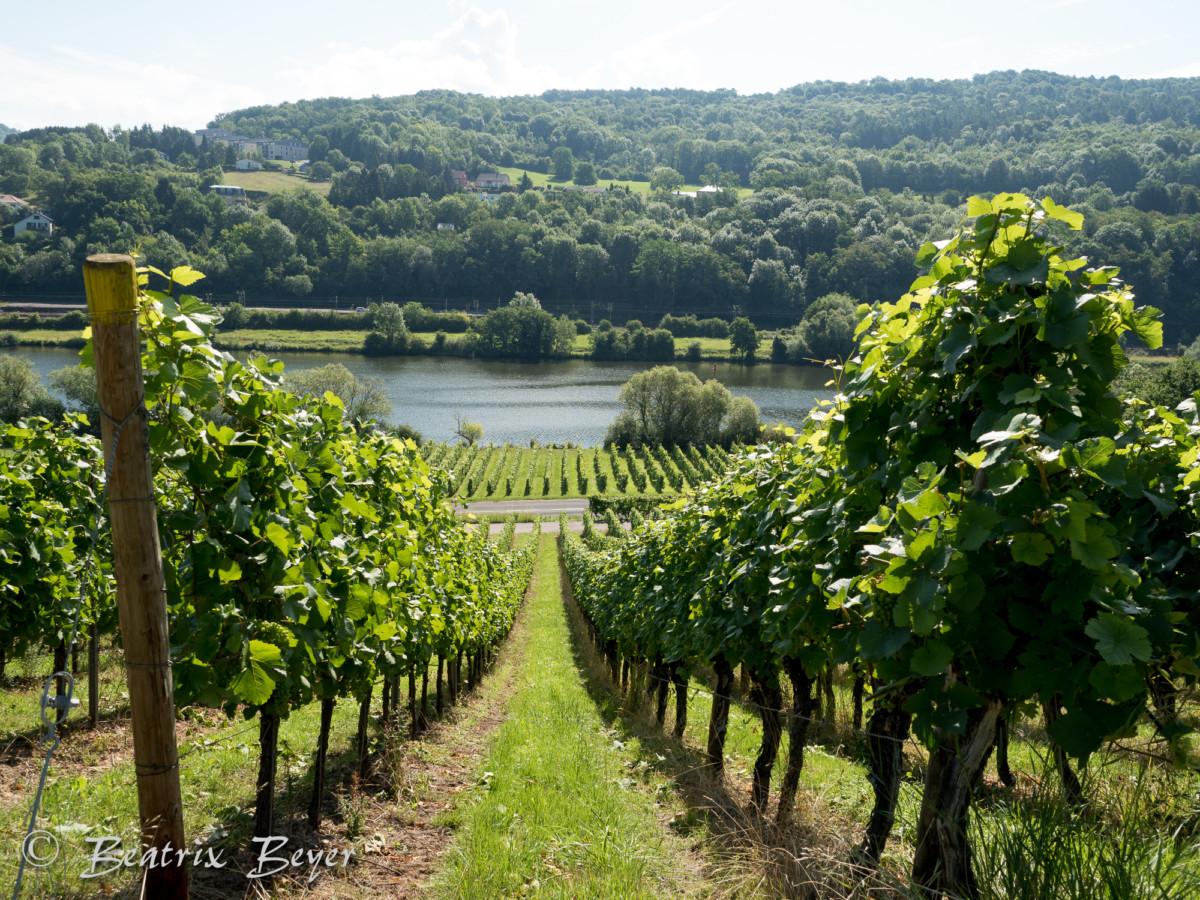 Abenteuer Jakobsweg von Trier nach Metz Juli 2017
