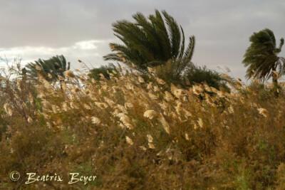 im Dorf Tunis entdeckt